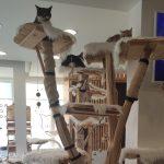 pravilnik o radu hotela za životinje