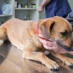cijepljenje psa