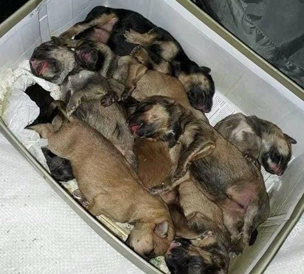 neželjeni štenci - rezultat nepropisivanja trajne sterilizacije