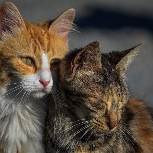Napuštene mačke