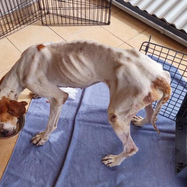 pothranjeni pas