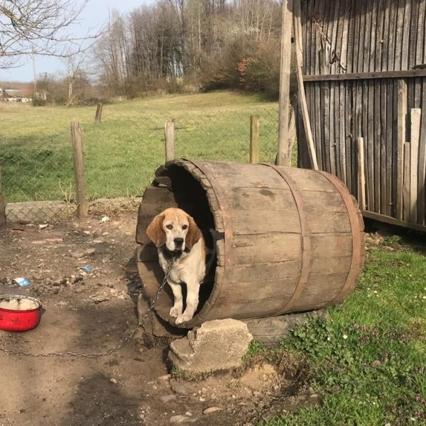 zakonske izmjene za dobrobit pasa