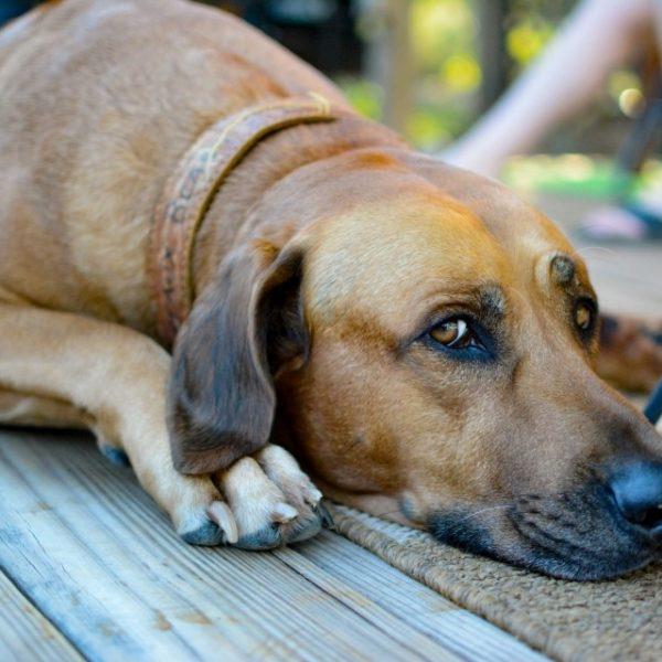 presuda za silovanje psa